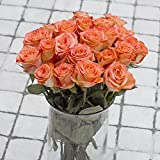 Greenchoice – 50 Fresh cut Orange Roses | 20 '' long stem | No vase