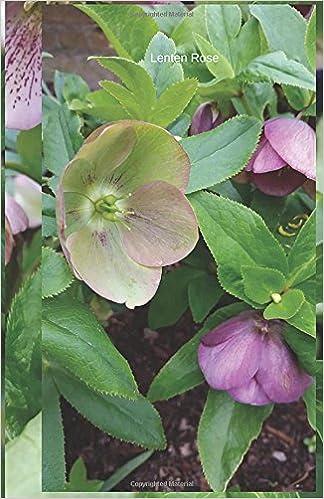 Lenten Rose: Journal (In The Garden)