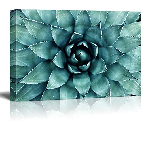 Closeup Teal Succulent Plant Wall Decor