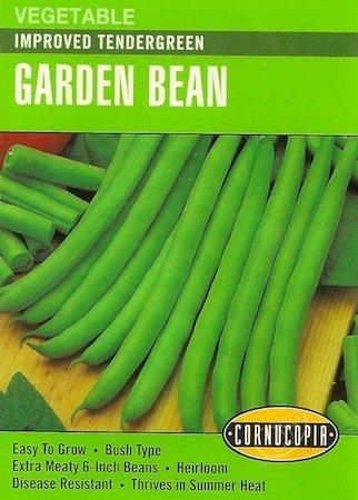 Heirloom Bush Bean Improved Tendergreen