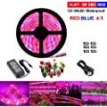 Led Strip Light Topled Light Plant Grow Light With Power Adapter 5050 Smd Waterproof Full Spectrum Red Blue 4 1 Rope Lamp For Aquarium Greenhouse Hydroponic Plant Veg Garden Flowers 5 M