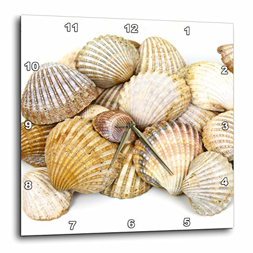 3dRose DPP_50550_3 Sea Shells by The Sea Shore Summer Beach Theme Wall Clock, 15 by 15-Inch