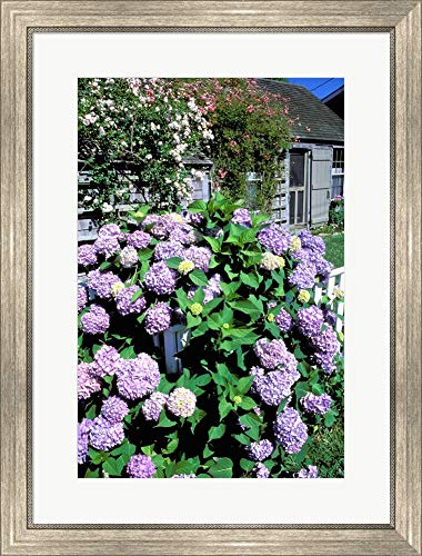 Nantucket Floral Picture Frame - Massachusetts, Nantucket, Siasconset, Home Flowers by Walter Bibikow/Danita Delimont Framed Art Print Wall Picture, Silver Scoop Frame, 23 x 30 inches