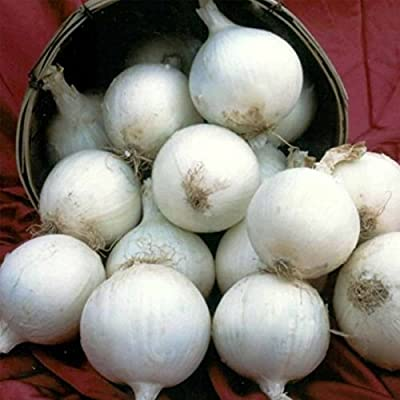 White Sweet Spanish Onion Garden Seeds - Non-GMO, Heirloom Vegetable Gardening & Microgreens Seed