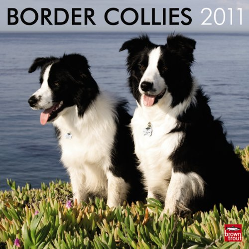 2010 Collie Calendar Wall - Border Collies 2011 Square 12X12 Wall Calendar (Multilingual Edition)