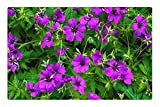 Tree26 Indoor Floor Rug/Mat (23.6 x 15.7 Inch) - Plant Flower Cranesbill Geranium Sanguineum