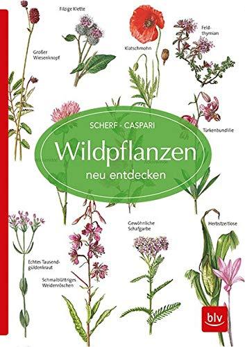 wildpflanzen-neu-entdecken