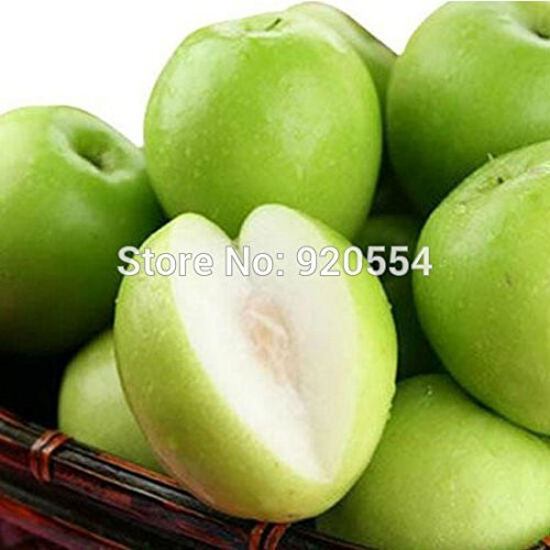 Hot selling 20pcs/lot Taiwan39;s big jujube ,sweet dates seed evergreen fruit tree bonsai plant DIY home garden