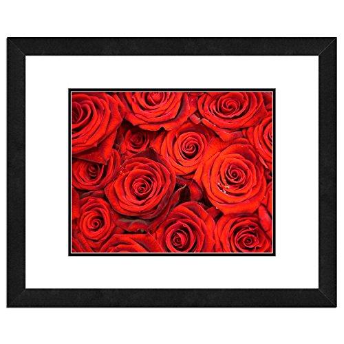 Rose Framed Photograph - 3