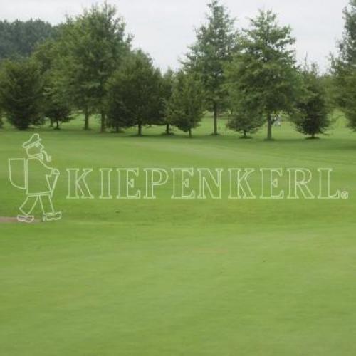 Kiepenkerl RSM 4.4.2 Golfrasen Spielbahn 10kg, Rasensamen, Rasensaat