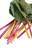 Burpee Bright Lights Blend Swiss Chard Seeds 100 seeds