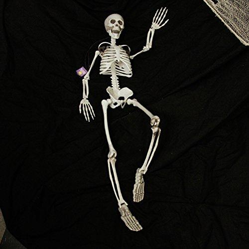 Halloween Haunters 3 Foot Hanging Full Body Skeleton Plastic Prop Decoration - Posable Joints, Scary Human Skull & Bones by Halloween Haunters (Image #4)