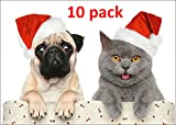 'CHRISTMAS CAT WITH PUG': Pack of 10 funny christmas cards with a cute cat with a young pug - best for cat- and dog-lovers, families with children and postcrossing