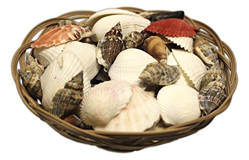 "MayRich 6"" Mixed Sea Shells Basket"