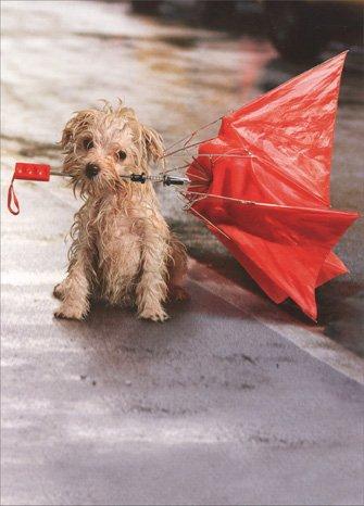 Dog In Rain with Umbrella Encouragement Card