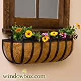 XL Scroll Hay Rack Window Basket w/ XL Coco Liner - 48 Inch