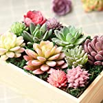 Augshy-16-Pack-Artificial-Succulent-Flocking-Plants-Unpotted-Mini-Fake-Succulents-Plant-for-Lotus-Landscape-Decorative-Garden-Arrangement-Decor