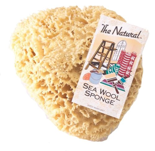 Natural Sea Sponges - The Natural Sea Sponge, 7 to 8-Inch, Wool