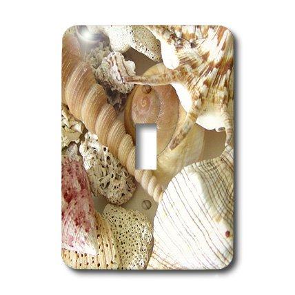 3dRose lsp_40855_1 Florida Keys Seashells Single Toggle ()