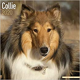 Ucf Calendar 2020 Collie Calendar   Dog Breed Calendars   2019   2020 Wall