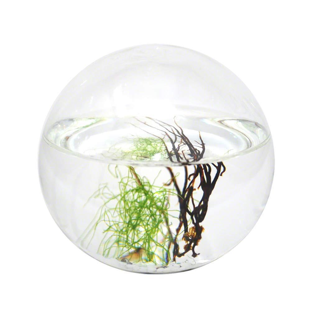 ec63f4ac93d6 Amazon.com   EcoSphere Small Sphere   Aquariums   Pet Supplies