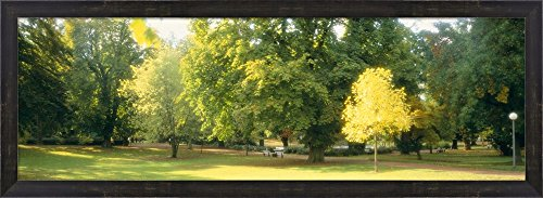 Trees in a park, Wiesbaden, Rhine River, Germany by Panoramic Images Framed Art Print Wall Picture, Espresso Brown Frame, 38 x 14 inches (River Framed Rhine)