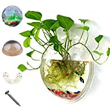 Sealands Wall Mounted Acrylic Fish Bowl Vase Flower Plant Pot Aquarium Home Decoration Mount Tank