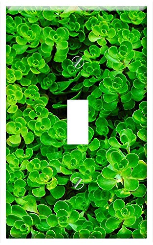- Switch Plate Single Toggle - Ground Cover Foliage Green Landscape Leaves Nature
