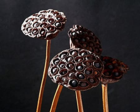 Amazon.com: Natural Dried Flower Lotus Pods on Stems With Seed And Real Rod Dried Floral Crafts Pack of 5 (dia 7-9cm): Home & Kitchen