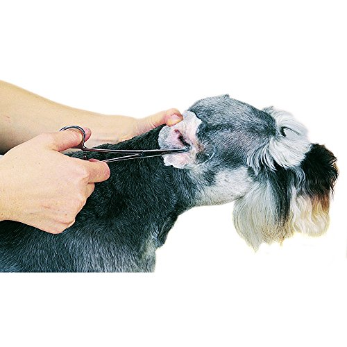 Top-Performance-ProEar-Professional-Ear-Powder-Easy-to-Use-Powder-for-Cleaning-Dog-and-Cat-Ears-80g