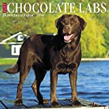Just Chocolate Labs 2018 Wall Calendar (Dog Breed Calendar)