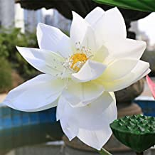 Fake Silk Artificial Simulation Ornamental Decorate Lotus Flower (pack of 3) Color:White