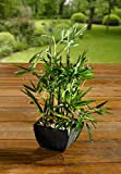 PierSurplus 3.75 ft. (45 in.) Faux Bamboo Plant