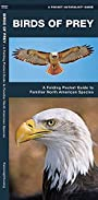 Birds of Prey: A Folding Pocket Guide to Familiar North American Species (A Pocket Naturalist Guide)