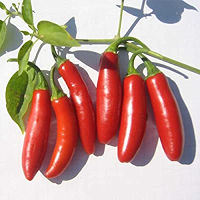 Serrano Tampiqueno Hot Pepper Garden Seeds - Non-GMO, Heirloom Vegetable Gardening Seed