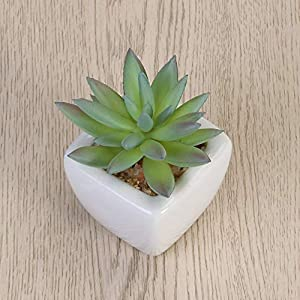 MARJON FlowersModern, Potted, Green, Artificial Succulent Plants, Mini Fake, Cube Flower Pot, for Indoor and Outdoor Decoration Lachen Lotus 2