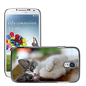 Hot Style Cell Phone PC Hard Case Cover // M00112851 House Cat Cat Pet Pet Cat // Samsung Galaxy S4 S IV SIV i9500