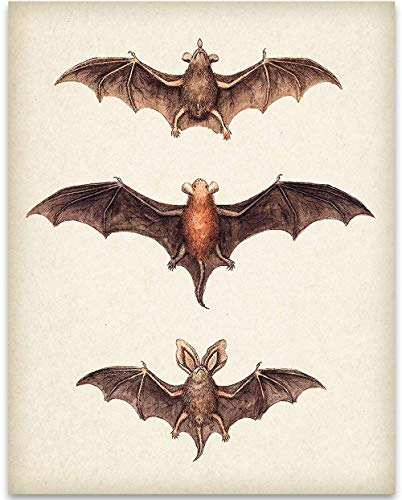 Vintage Bat Painting - 11x14 Unframed Art Print - Great Biology Lab Decor or Gift for People Who are Fascinated with Bats, Also Makes a Great Gift Under $15