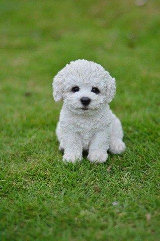 Hi-Line Gift 87771-P Pet Pals - Sitting Bichon Frise Pupp...