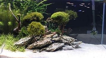 Tm Aquatix 5 Kg Natural Wood Stone For An Aquarium Aquascaping