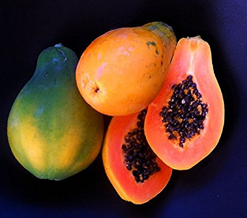 - Package of 50 Strawberry Papaya Seeds Tropical Fruit Tree Seeds Home Garden Plant