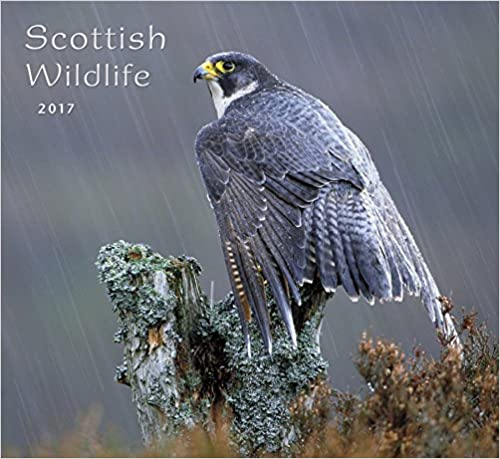Scottish Wildlife 2017 Calendar