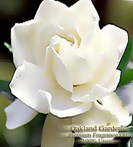 BULK Fragrance Oil - GARDENIA Fragrance Oil - Very strong white floral. Distinctive and lush - By Oakland Gardens (120 mL - 4.0 fl oz Bottle)