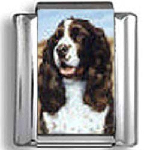 Spaniel Dog Photo Charm (English Springer Spaniel Dog Photo Italian)