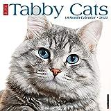 Just Tabby Cats 2022 Wall Calendar (Cat Breed)