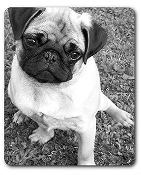 Perros - Carlino Gracioso Alfombrilla para Ratón (23 x 19cm): Amazon.es: Hogar