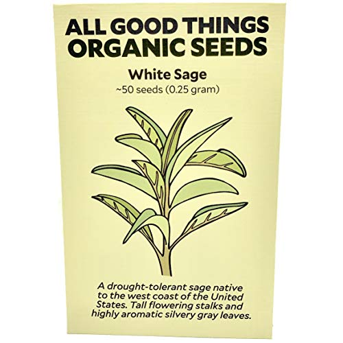 (White Sage (Salvia apiana) Seeds (~50) by All Good Things Organic Seeds: Certified Organic, Non-GMO, Heirloom, Open Pollinated Seeds from the United)