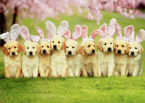 Row Of Puppy Bunnies - Avanti Dog Easter Card