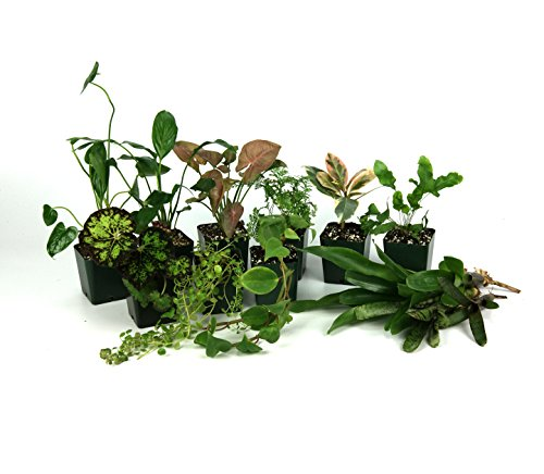 24x18x18 Tropical Vivarium Plant Kit by Josh's Frogs