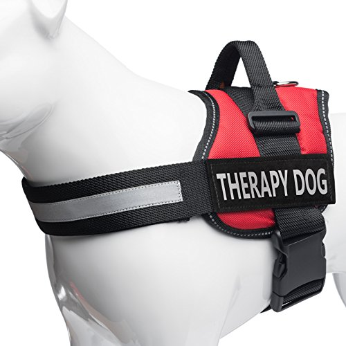 Therapy Dog In Training Vest Amazon